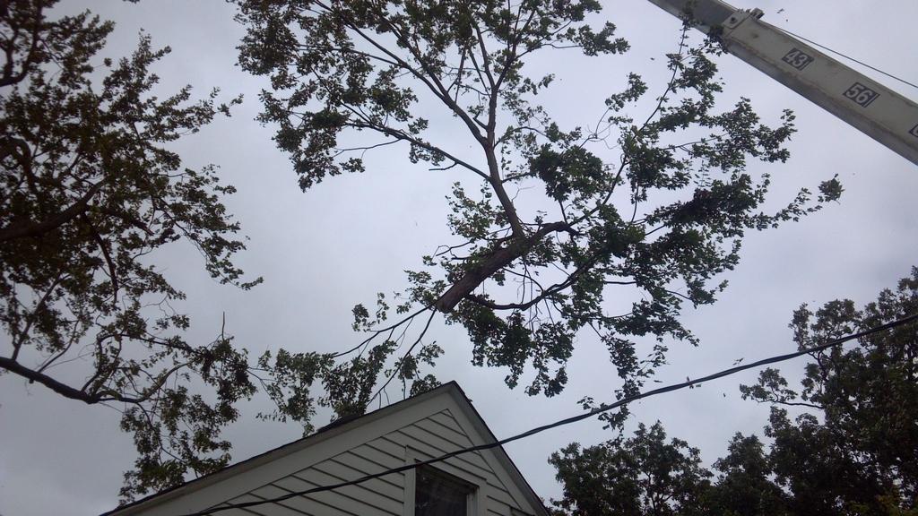 treetrimming3